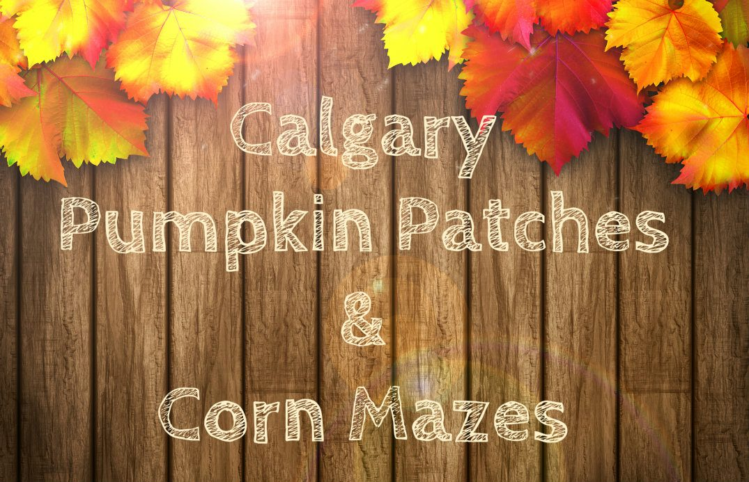 Pumpkin Patches and Corn Mazes Calgary AB